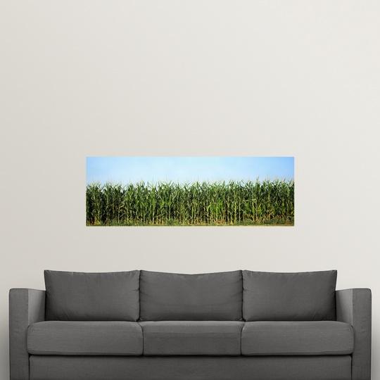 "Wall Decal /""Corn crop in a field Wisconsin/"""