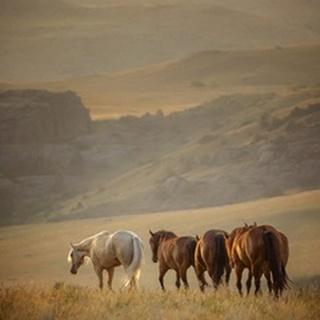Sunkissed Horses VI