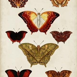 Butterflies Displayed I