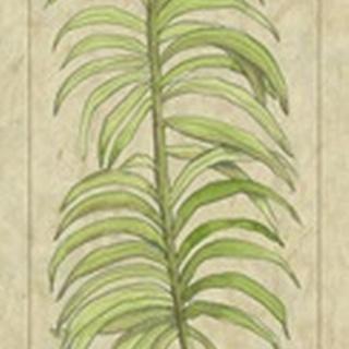 Arecaceae Leaf
