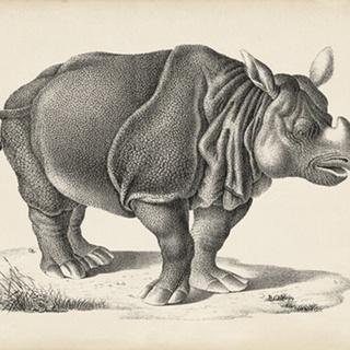 Brodtmann Rhinoceros