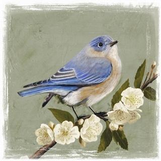 Bluebird Branch I