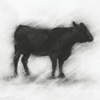 Charcoal Bovine Study II