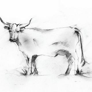Charcoal Bovine Study III