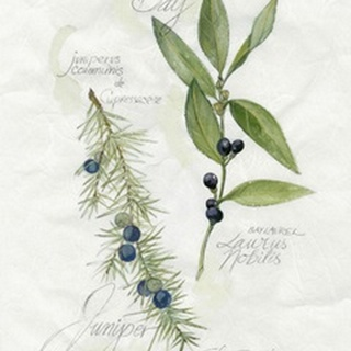 Bay Leaf and Juniper