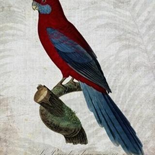 Parrot Jungle II