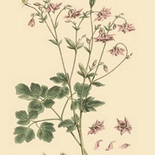 Blushing Pink Florals IX