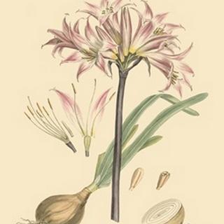 Blushing Pink Florals II