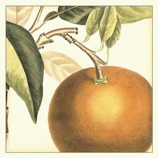 Graphic Orange