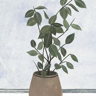 Mes Plants I