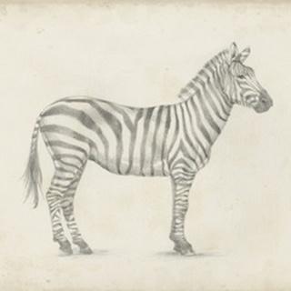 Zebra Sketch