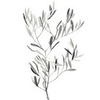 Paynes Grey Botanicals IV