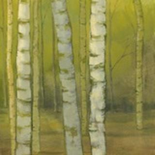 Sunny Birch Grove II