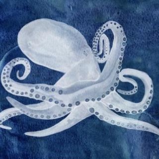 Cephalopod I