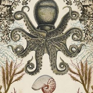Antiquarian Menagerie - Octopus