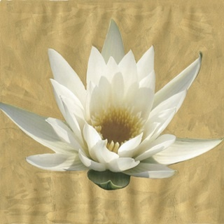 Gilded Lily II