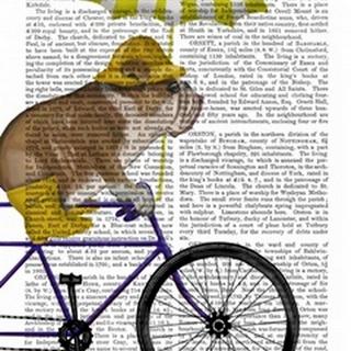 English Bulldog on Bicycle