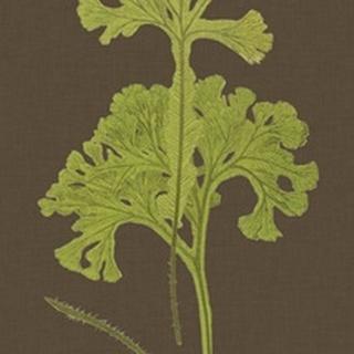 Ferns on Linen II