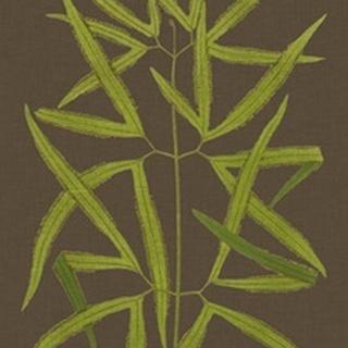 Ferns on Linen I