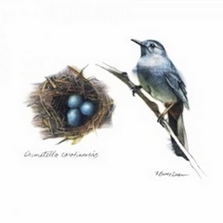Bird and Nest Study II