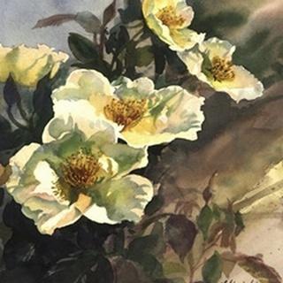 Hadfield Roses I