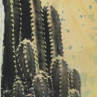 Desert Dreams IV
