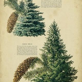Colorado Blue Spruce andNorway Spruce