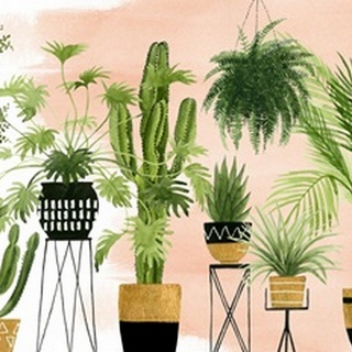 Indoor Oasis Collection A