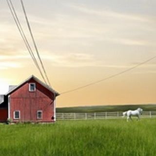 Farm and Country IV