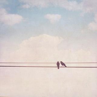 Birds on Wires II