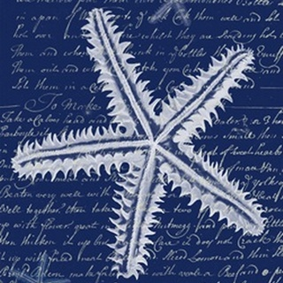 White Starfish on Blue a