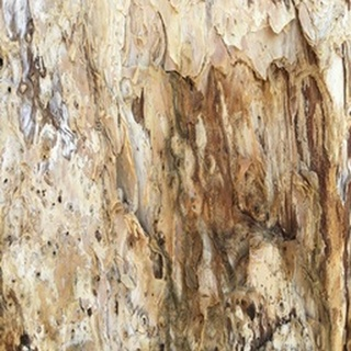 Tree Texture Triptych III