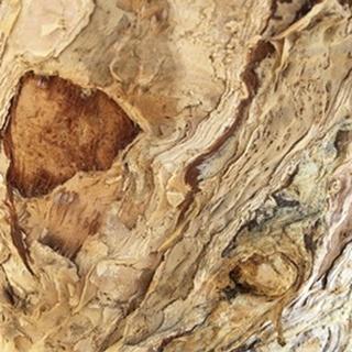 Tree Texture Triptych II