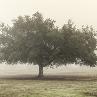 Trees in the Fog II