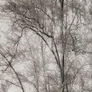 Tree Triptych I