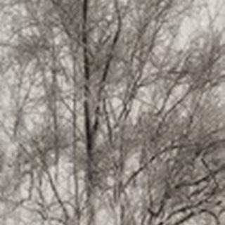 Tree Triptych III