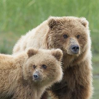 Bear Life III