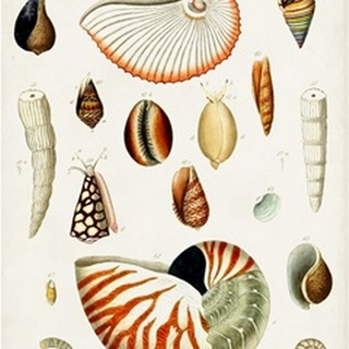 Antique Shell Collection I