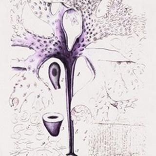 Seaweed Illustration VII