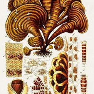 Seaweed Illustration III