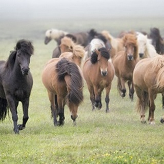 Grassland Horses II