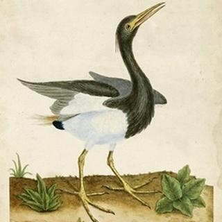 Heron Portrait V
