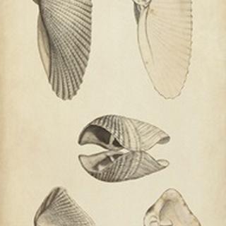 Marine Mollusk III