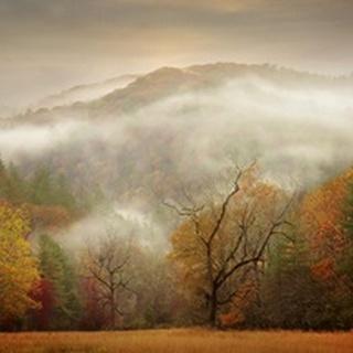 Photography Study Autumn Mist
