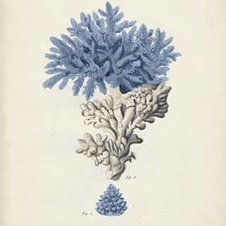 Antique Coral in Navy III