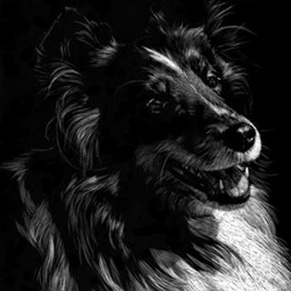 Canine Scratchboard XI