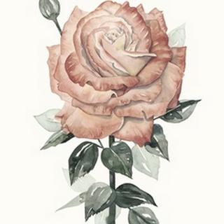 Beholden Rose II