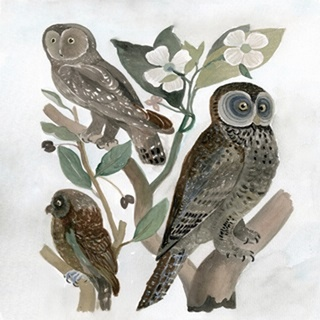 Traditional Owls II