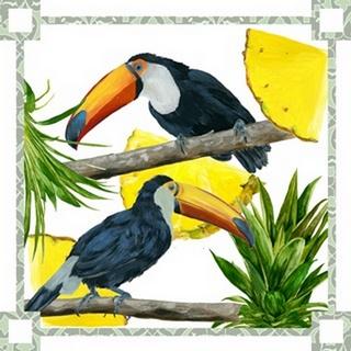 Toucan Tropical Collection A