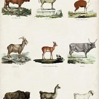 Antique Animal Chart I
